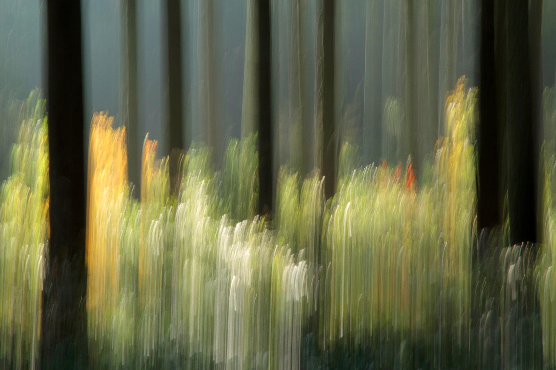 vor lauter Bäumen IX